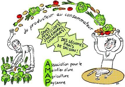 dessin-amap.jpg