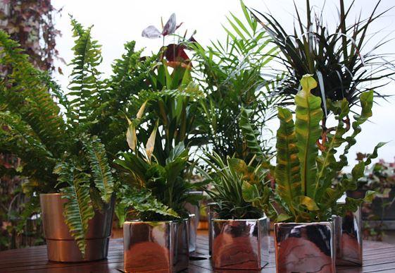 plantes dépolluantes.png