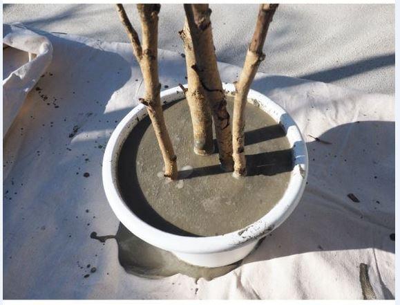 pot en ciment avec branches 001.JPG
