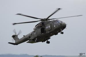 2950-Merlin-ZJ-137_9407.JPG