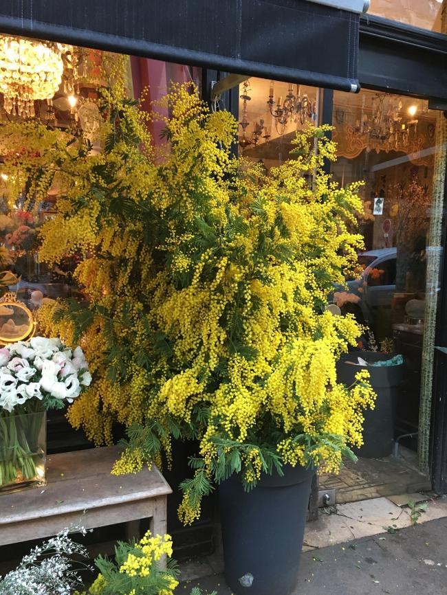 Mimosa chez un fleuriste avenue Ledru Rollin