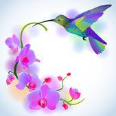 depositphotos_19160827-Rainbow-humming-bird-with-violet-orchids.jpg