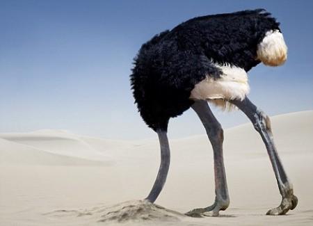 ostrich-450x325.jpg