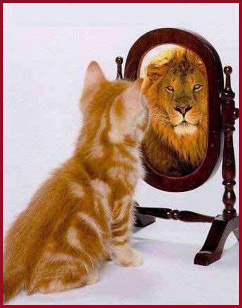 chat_lion.jpg