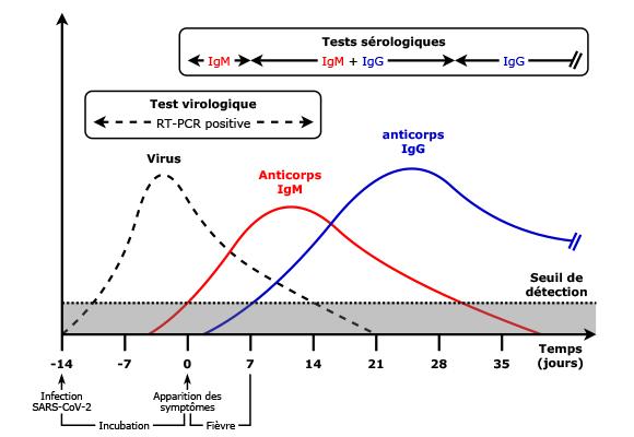 trajectoires-sars-cov-2.png