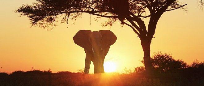 elephant-afrique.jpg