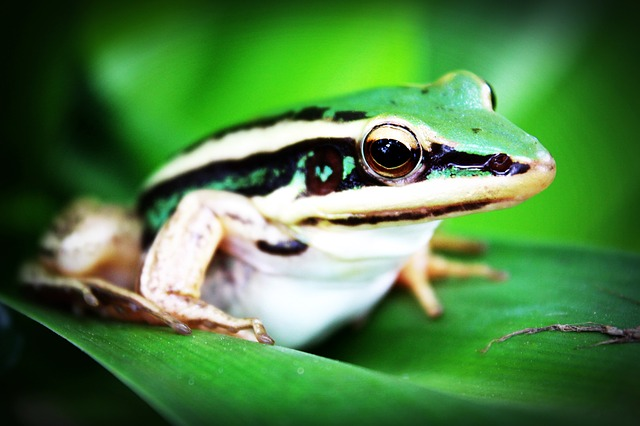 treefrog-765123_640.jpg