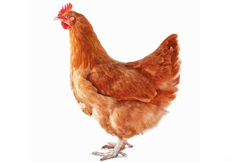 Souvenirs d 39 enfance lesenfantsde la grandruevalreas - Image d une poule ...