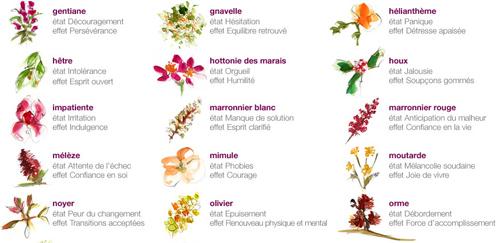 Les Fleurs De Bach Sante Et Therapies Naturelles