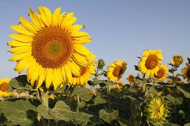 Bon jour soleil au coeur .jpg