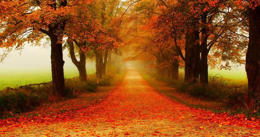 automne magnifique.png