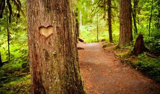 Coeur sur l'arbre.jpg