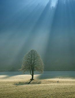 Hymne nature.jpg