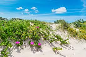dune et fleurs.jpg