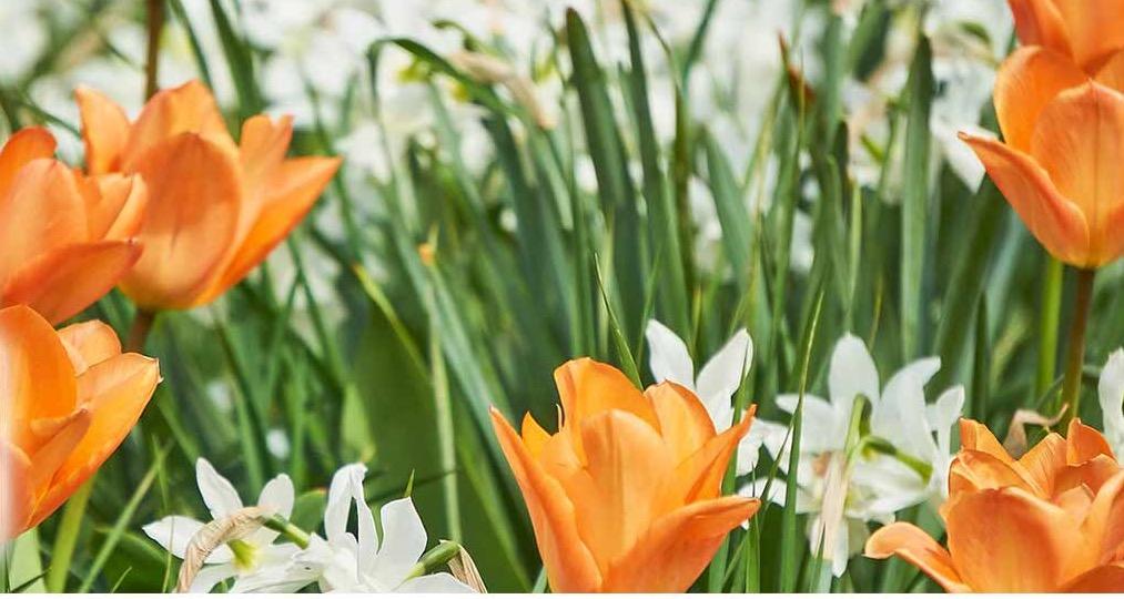fleurs juin.jpg