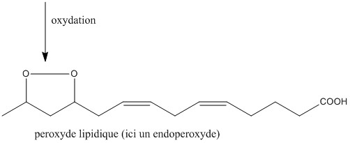 peroxyde lipidique.jpg