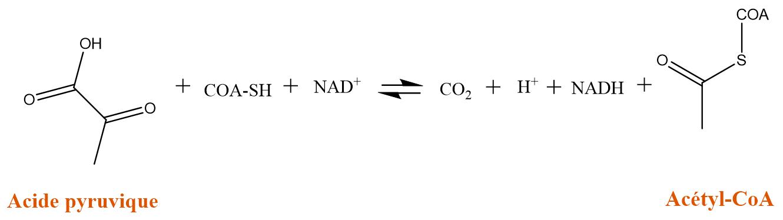 acéty-CoA.png