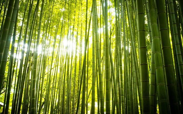 6930490-zen-nature-bamboo640.jpg