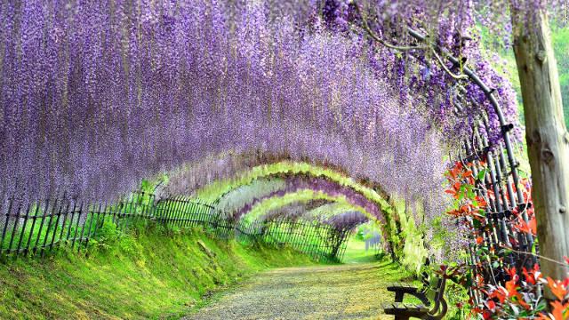 1.kawachi-wisteria-full-169_640.jpg