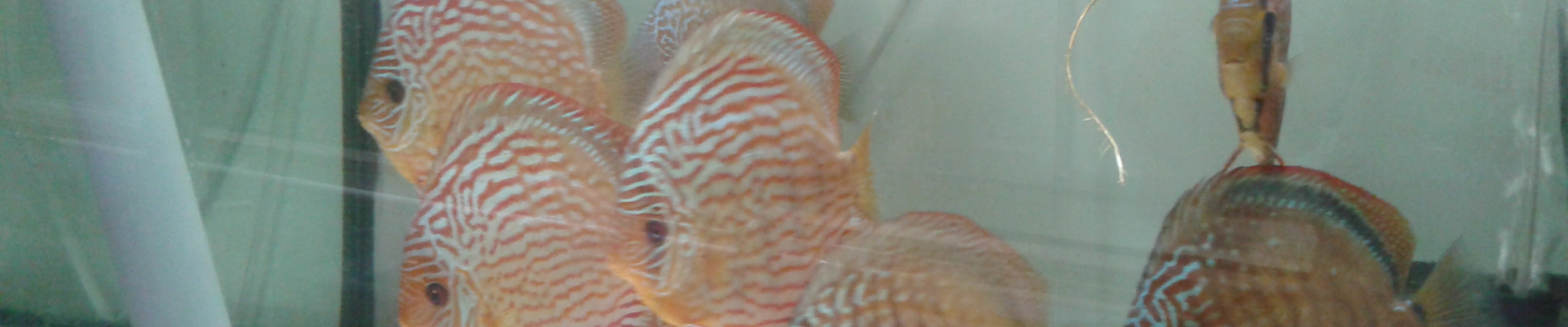 franck-fishroom-discus & co