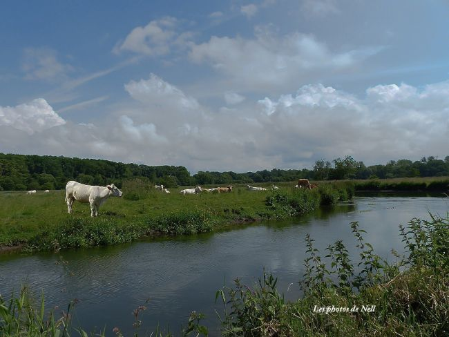 Toupeau de vaches, vallée de la Seulles14