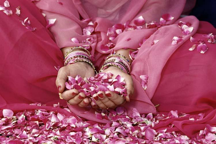 petalesde rose.jpg