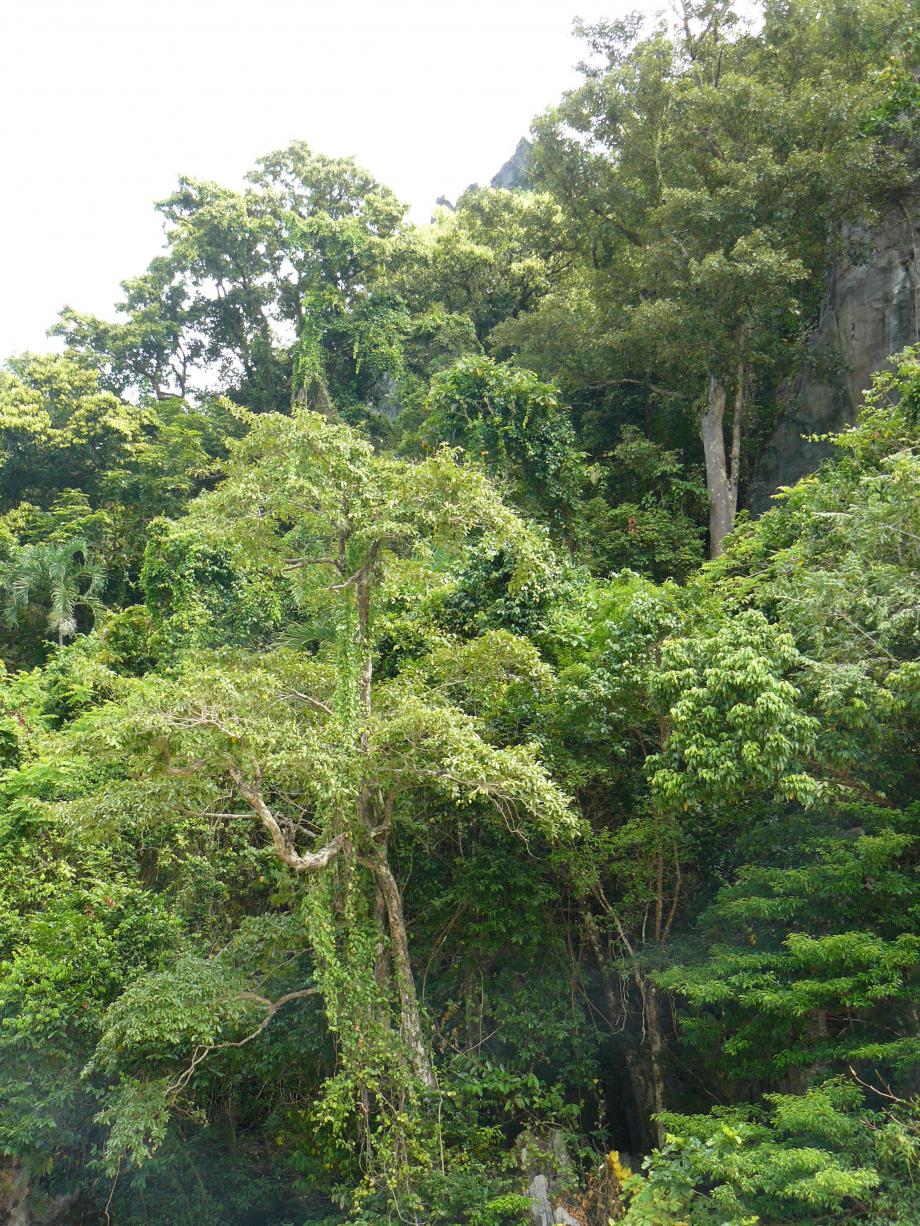 285-trip philippines 2012 696.JPG
