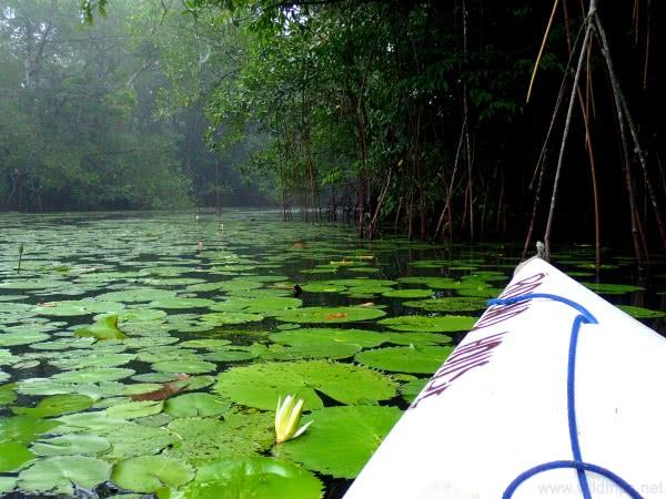 Rio-Dulce-Guatemala-kayak.jpg