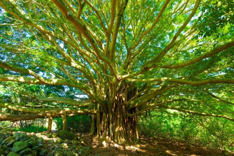 arbre-de-vie--810x540.jpg