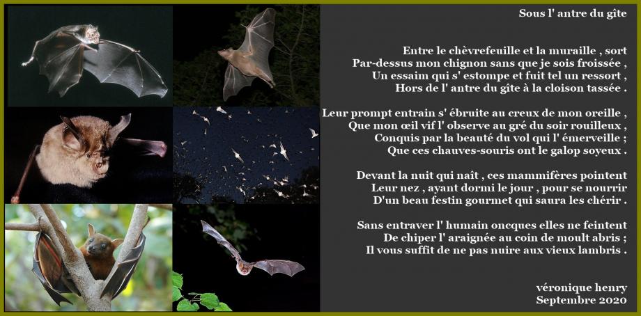1200px-Wikipedia-Bats-001-v01