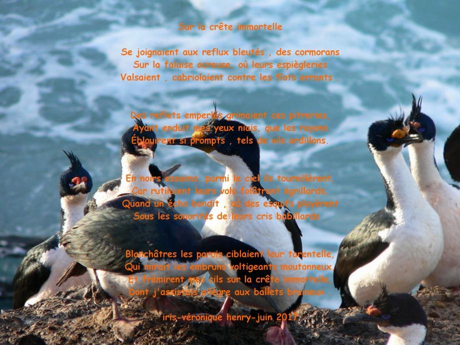 texte cormoran.jpg