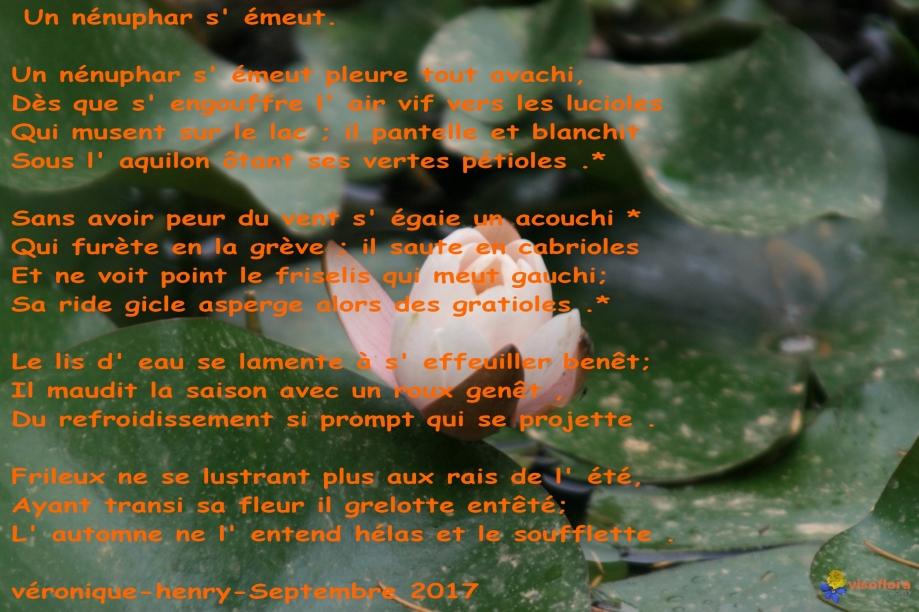 bouton-de-nenuphar-visoflora-3481.jpg