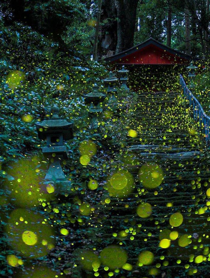 photos-lucioles-japon-2.jpg
