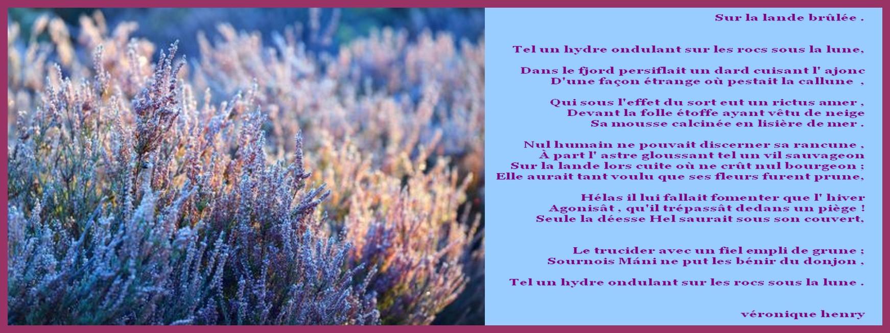 depositphotos_169412442-stock-photo-heather-plants-at-the-sunrise.jpg