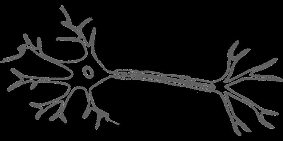 brain-2022398_1280