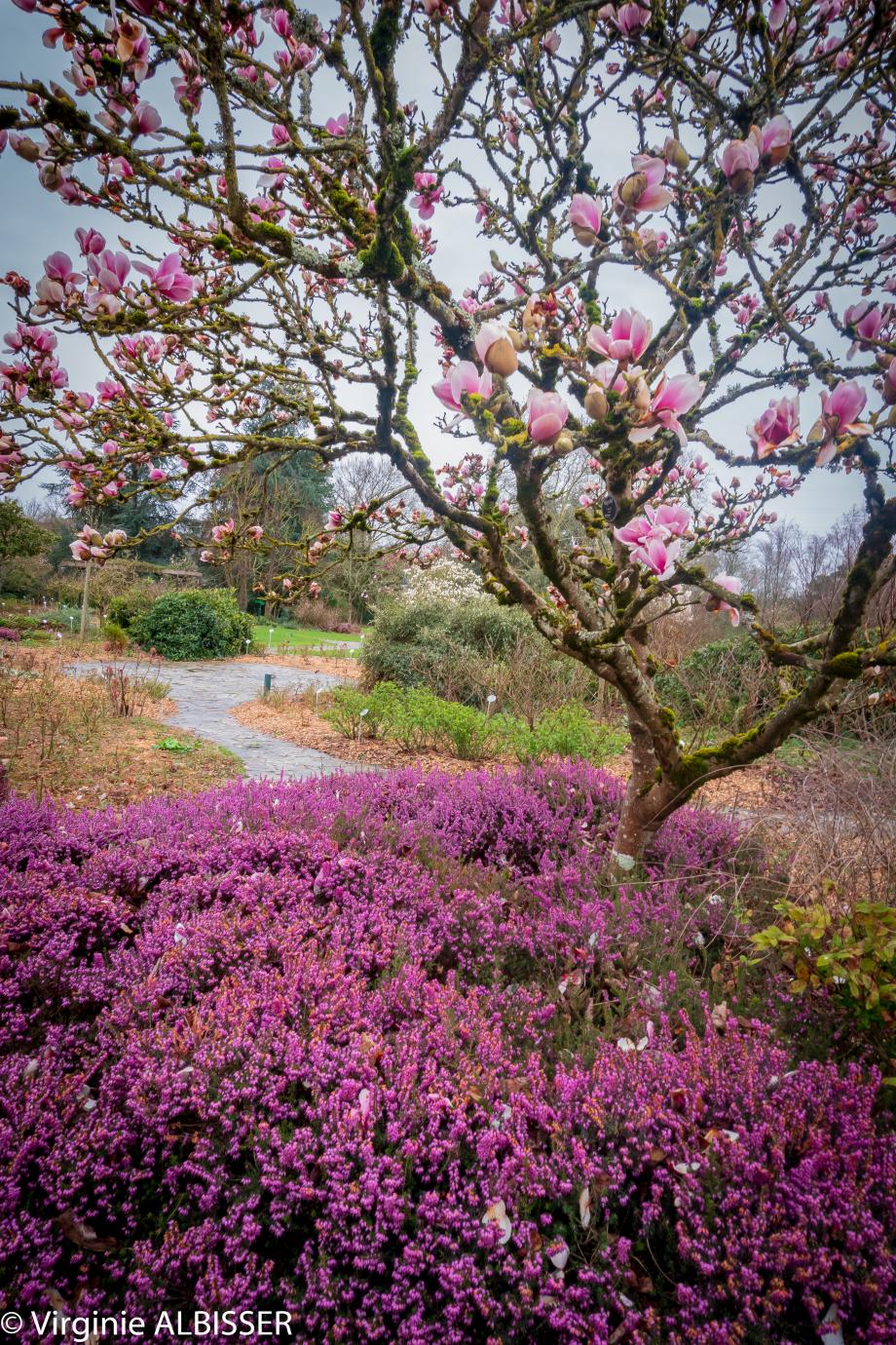 Parc Floral de la Beaujoir (4 sur 16).jpg
