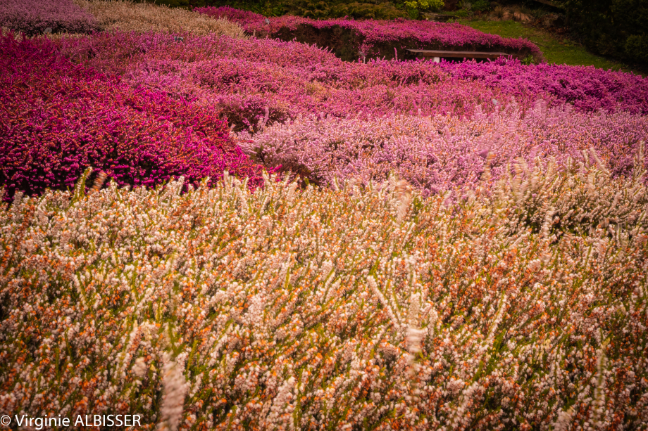 Parc Floral de la Beaujoir (12 sur 16).jpg