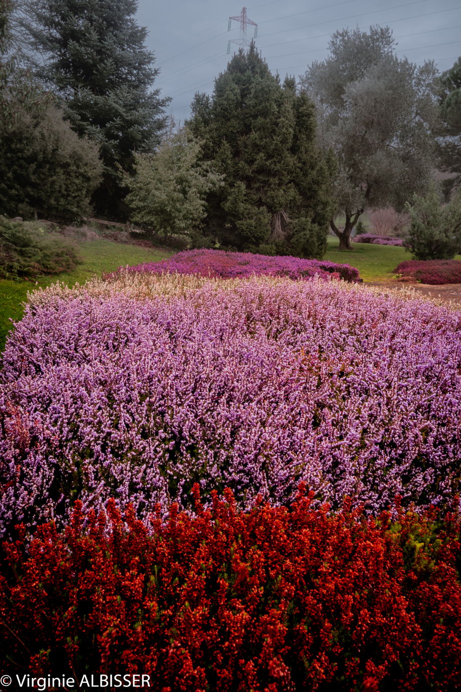 Parc Floral de la Beaujoir (11 sur 16).jpg