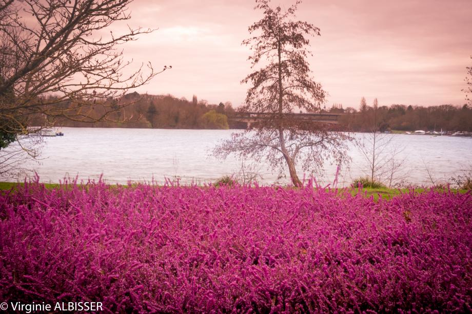 Parc Floral de la Beaujoir (1 sur 1).jpg