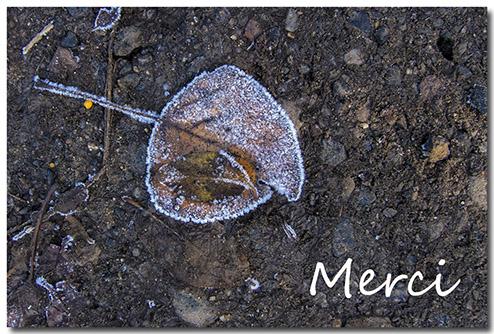 MerciBlogRED.jpg