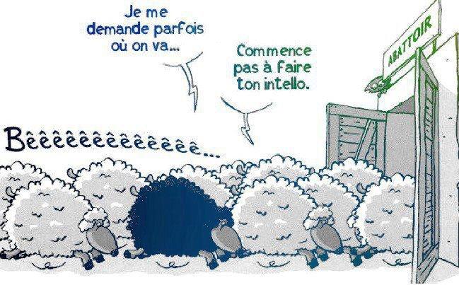 mouton-noir-intello-abattoir.jpg