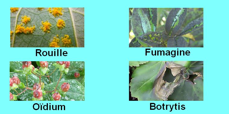 maladies des plantes.png