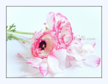 carte postale fleur couple de renoncule un-oiseau_dans_sa_bulle.com