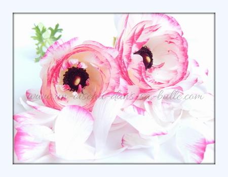carte postale fleur renoncules et pétales un-oiseau_dans_sa_bulle.com