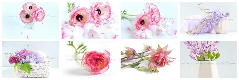 carte postale fleur un-oiseau-dans-sa-bulle.com