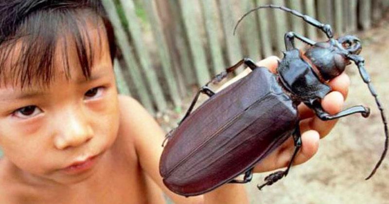 insectes-enormes.jpg