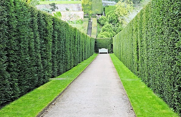haies-dans-un-jardin.jpg