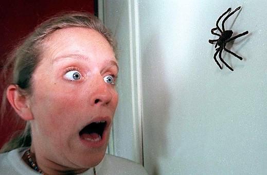 phobie-araignees.jpg