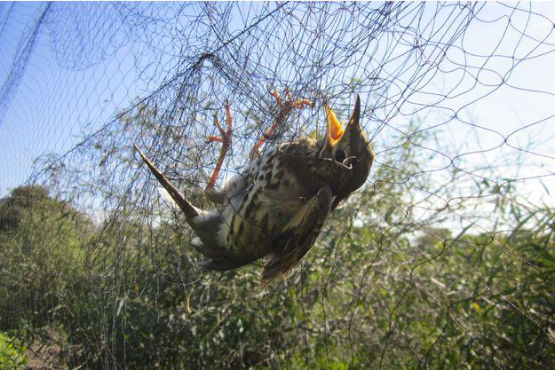L-homme-tue-25-millions-d-oiseaux-chaque-annee.jpg
