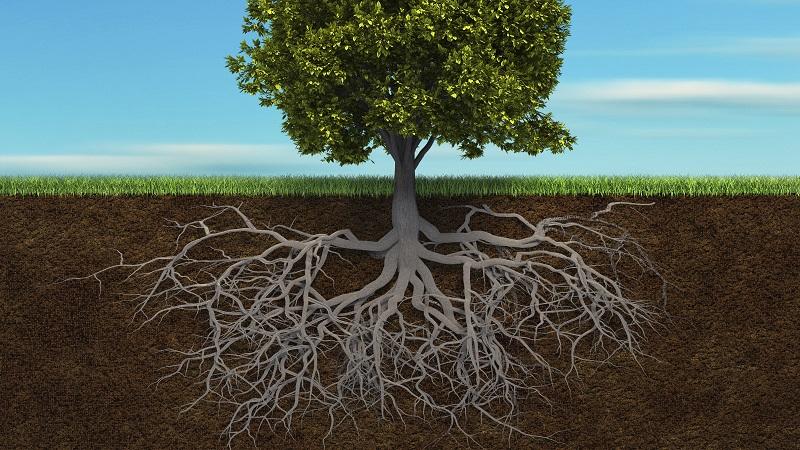 les-racines.jpg
